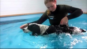 hydrotherapie sessie Chip