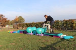 Vervolg workshop honden fitness @ Dogs&enzo