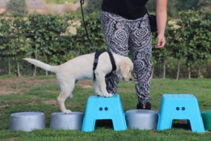 Workshop Puppy gym @ Dogs&zo